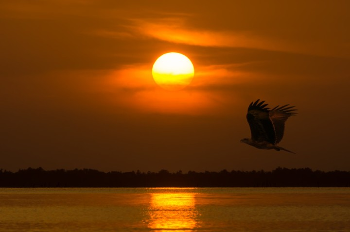 falcon at sunset